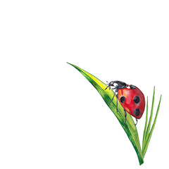 Fototapeta Sticker design of summer lawn plants with insect. Illustration of green grass with ladybug on big leaf. Watercolor hand painted isolated elements on white background. obraz