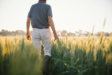 Farmer checking broadacre cereal crop in the Wheatbelt of Western Australia