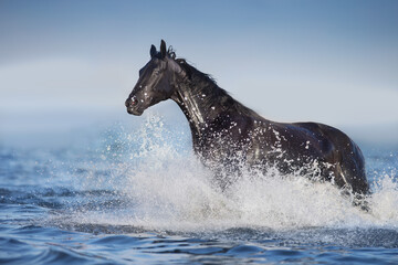 Wall Mural - horse in water