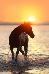 Wall Mural - horse at sunset
