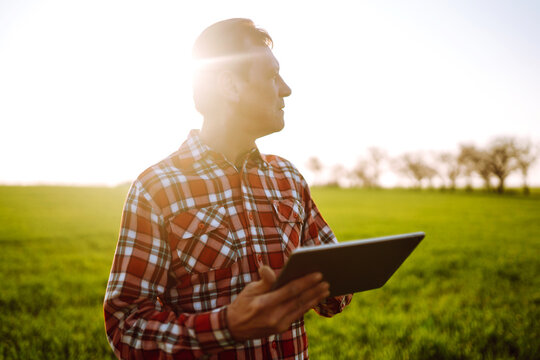 Owner farm using touch pad for check wheat quality in the field. Agronomist standing in wheat field and using a tablet at sunset. Smart farm. Agro business.
