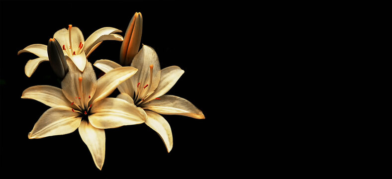 Condolence card with yellow lilies isolated on black background