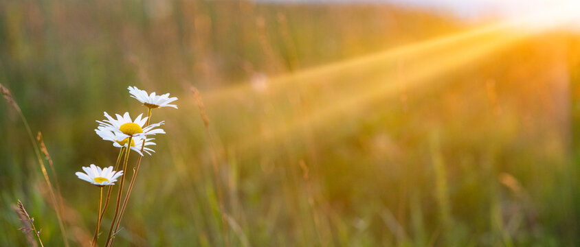 beautiful summer panorama of flowers on a field