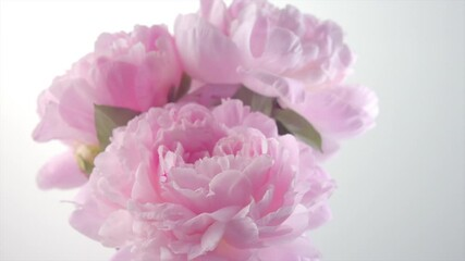 Fotoväggar - Beautiful pink Peony flowers bouquet in a vase rotation on grey background. Blooming peony flower bunch, close-up. Wedding backdrop, Valentine's Day concept. 4K UHD video