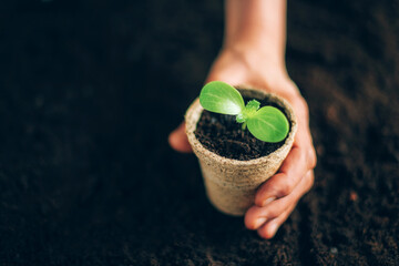 Agriculture, organic gardening, planting or ecology concept. Hand holding potted seedlings growing in biodegradable pots over soil background with copy space. Banner. Young sprouts. New life concept
