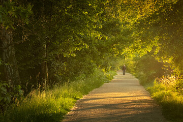 An old man walks through the park on the path. Sunset light scene in Hloubetin, Prague