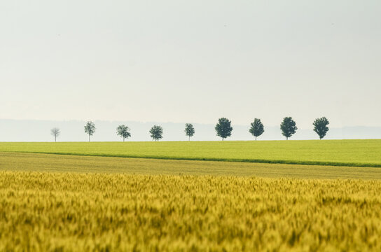 Row of trees along a field in spring in sunny day. Picturesque scene of agricultural area in the springtime. Location place of Ceske stredohori region, Czech Republic