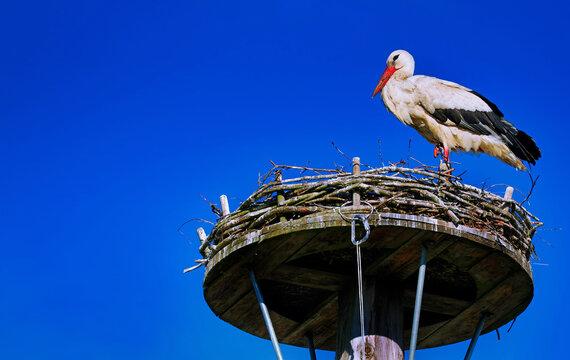 Storch im Nest in Niedersachsen, Deutschland