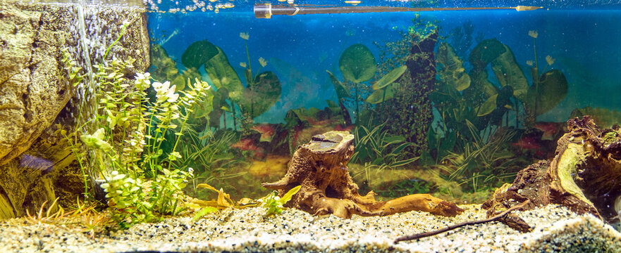 Plants and driftwood in the aquarium