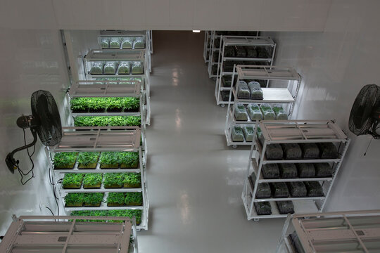 Clone Room of Government Approved Cannabis Grow Op