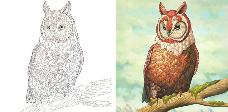 Coloring page and watercolor picture with owl