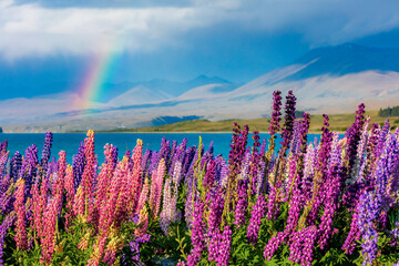 Scenic view of Lupine flowers by lake with rainbow in sky