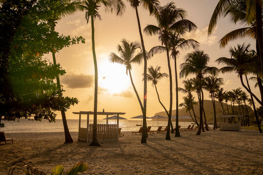 Sunset through palm trees on beach on island of Bequia in Saint Vincent and the Grenadines  in the Caribbean Ocean