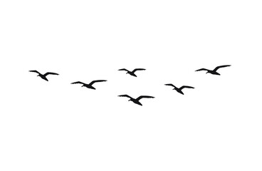 Vector hand drawn doodle sketch flying seagull birds flock silhouette isolated on white background