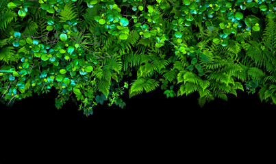 Ro艣liny wyizolowane na czarnym tle. Papro膰, olsza, trawy, kwiaty niezapominajek, li艣cie klonu.