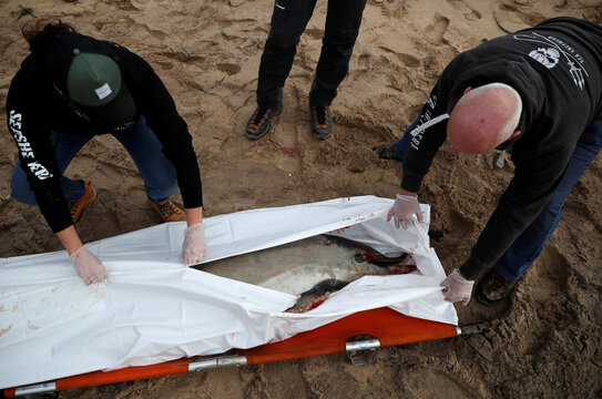 Dead dolphins are washing up on France's Atlantic coast in record numbers