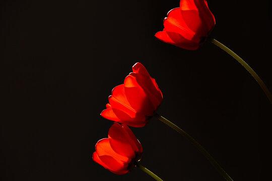 red flowers light