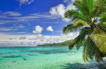 Photo sur Toile Palmier Eaux turquoises d'une plage paradisiaque