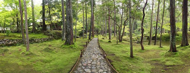 Wide panorama of the impressive moss garden in Kyoto (Saiho-ji temple)