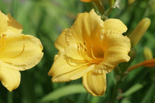 Beautiful summer flowers of New England