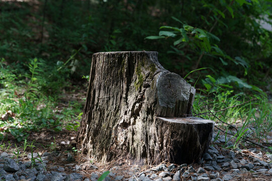 A lonely stump in New England
