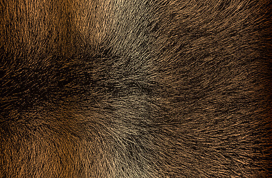 Distressed overlay texture of golden natural fur, grunge vector background.