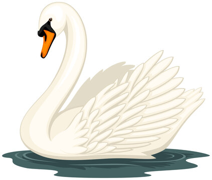 Vector illustration of a swan in water, against a white background.