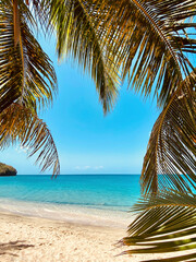 Palm tree fronds showcasing view of sandy beach with turquoise blue ocean and sky