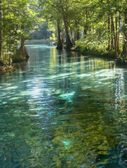 Little Devil's Spring on the Santa Fe River, Gilchrist County, Florida