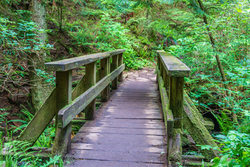 wood bridge in forest park in british columbia canada.