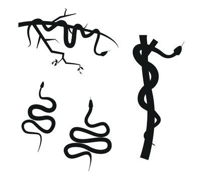 viper snake silhouette in tree branch