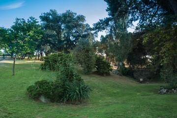 park drzewa trawa lato zieleń