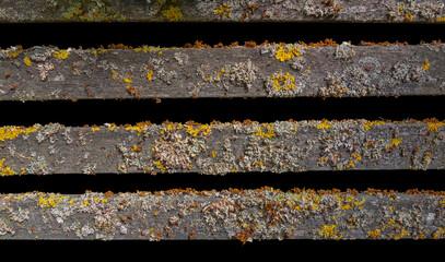 lichen on wooden bars