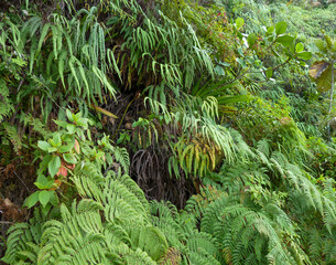 dense exotic vegetation
