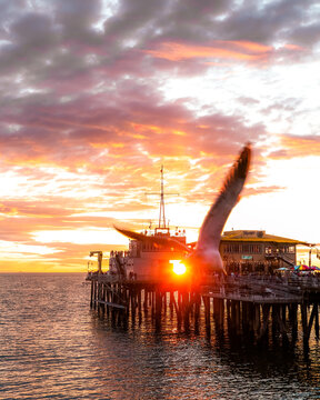 Sunset with bird at santa monica