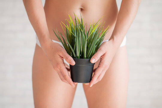 Bikini area depilation. Advertising Brazilian laser bikini line hair removal. A woman in white underwear is holding a potted plant. Epilation of vegetation in the intimate zone.
