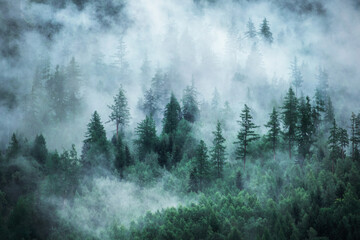 View of foggy mountains. Forested mountain slope in low lying cloud