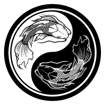 Ying yang symbol of harmony and balance. Hand drawn outline Koi fish vector illustration, tattoo design, japan style, line art ink work, animal wildlife.