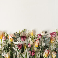 Flowers composition with many tulips, eucalyptus, wildflowers on white background. Flat lay, top view festive holiday celebration concept