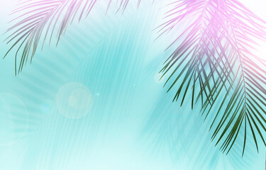 Photo sur Plexiglas Palmier Palm leaves
