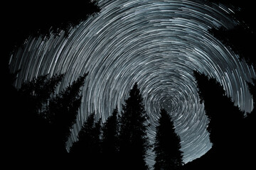 Silhouette of spruce at night sky with star trails