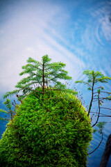 A miniature island in the lake with trees and plants.