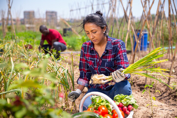 Latino woman working on a farm field on hot day