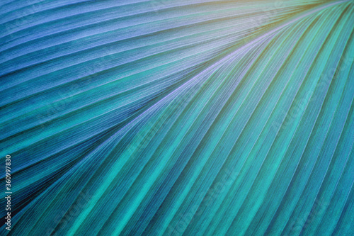 Wall mural abstract green leaf texture, closeup nature background, tropical leaf