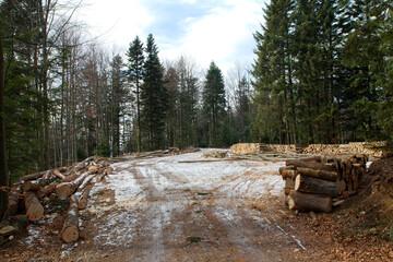 Fototapeta kłody drzew  na drodze obraz