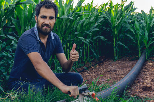 Drip irrigation system. Water saving drip irrigation system being used in a young corn field. Worker opens the tap. Agricultural background.