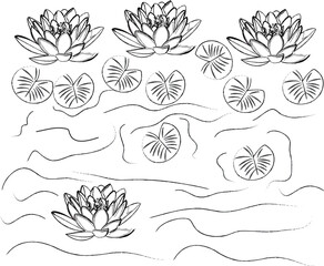 illustration vector image of lotus and leaves