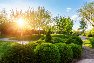 Tuinposter Tuin Generic green fresh round spheric boxwood bushes wall with warm summer sunset light on background at ornamental english garden at yard. Early autumn green natural landscape park background