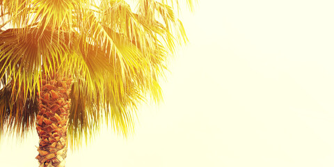 Photo sur Plexiglas Palmier Palm tree on a light background, vacation banner, summer background, sea tour, toned