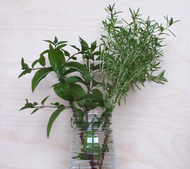 peppermint plant (Mentha piperita) and summer savory plant (Satu